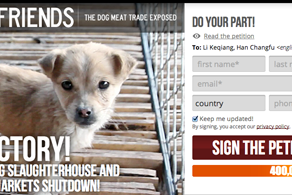 Stop dog trade in China